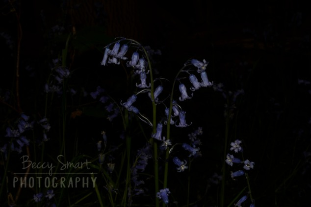 BeccySmartPhotography-4272
