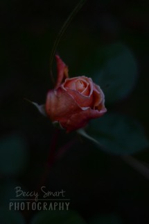 BeccySmartPhotography-4309
