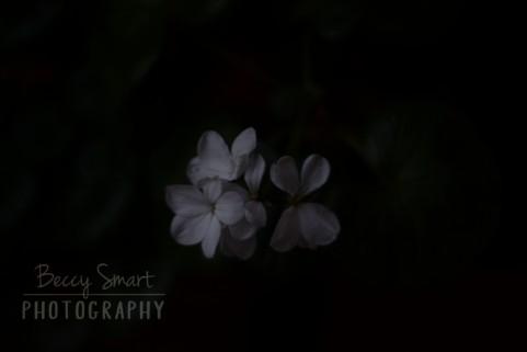 BeccySmartPhotography-4332