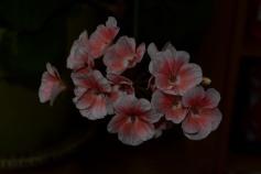 BeccySmartPhotography-5234